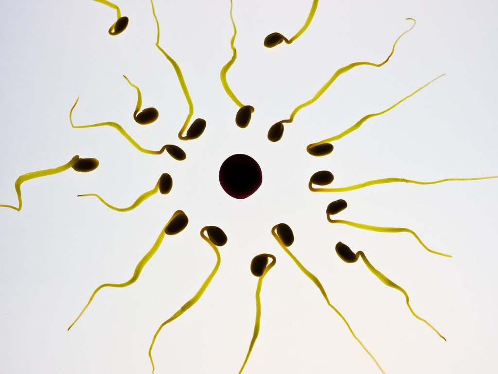 chinese medicine for ivf