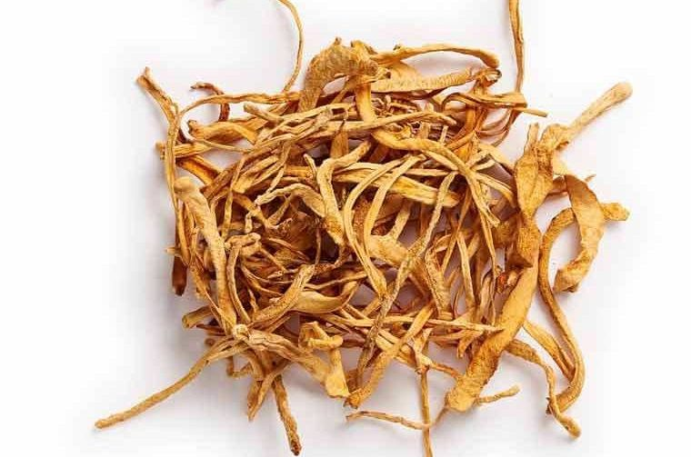 Why is Cordyceps so expensive and its benefits