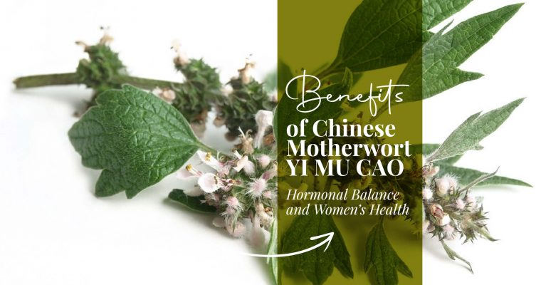 Benefits of Chinese Motherwort: Yi Mu Cao