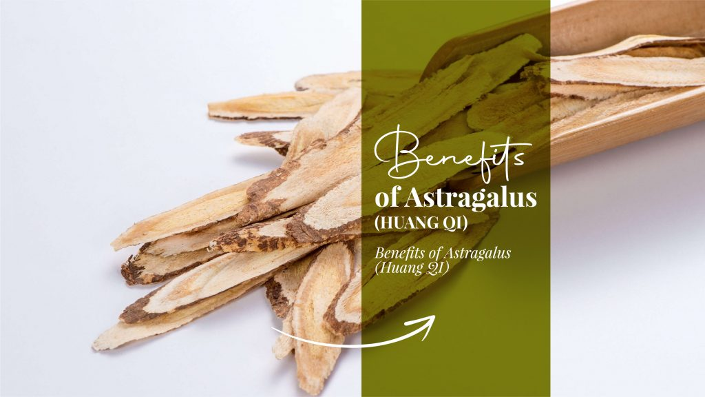 Benefits of Astragalus (Huang Qi)