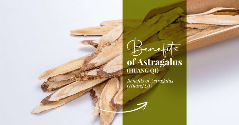 Benefits of Astragalus (Huang Qi)