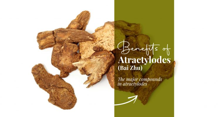 Atractylodes Health Benefits: Chinese Medicine